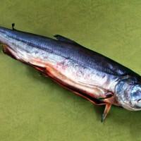 塩引鮭販売